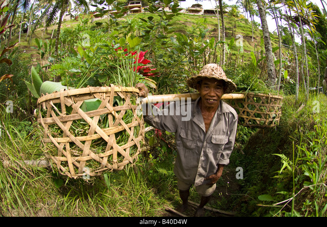 Terrace farming southeast asia stock photos terrace for Terrace farming model