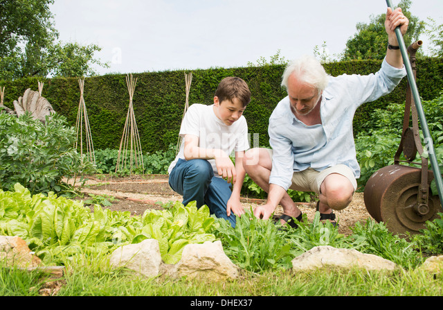 grandfather and grandson gardening stock image