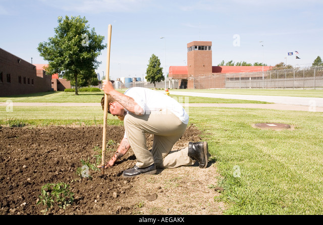 Inmate Working In Garden Inside The Omaha Correctional Center Omaha  Nebraska USA   Stock Image