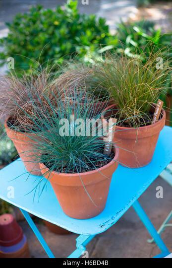 family cyperaceae stock photos & family cyperaceae stock images, Best garten ideen