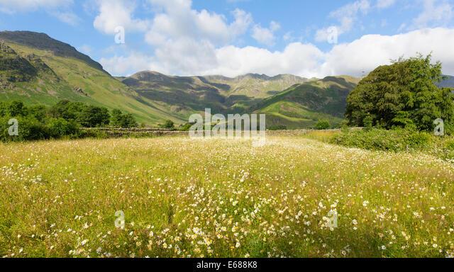 daisy field mountain sky - photo #21