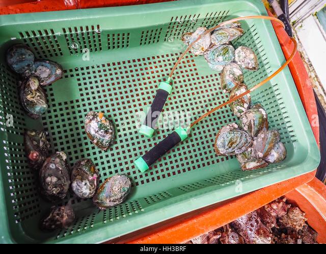 Turban shells stock photos turban shells stock images for Fresh fish shop near me