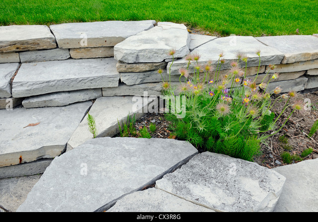 Wall planters stock photos wall planters stock images for Asian cuisine sudbury ontario
