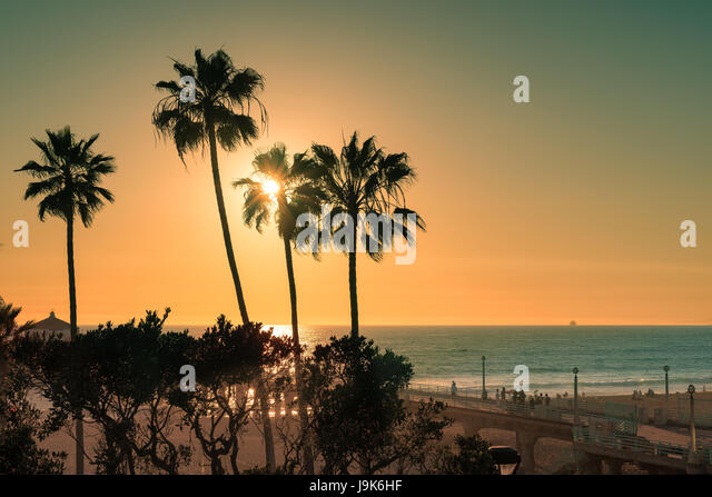 Palm trees on Manhattan Beach at sunset, California. - Stock Image