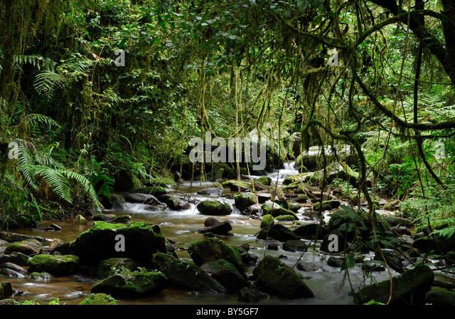Madagascar Rainforest Landscape Stock Photos & Madagascar ...
