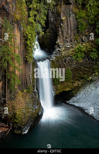 Basalt Stone Umpqua National Forest : Trees columnar basalt stock photos