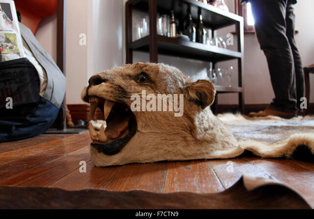 Skin Of A Mountain Lion Or Puma.   Stock Image
