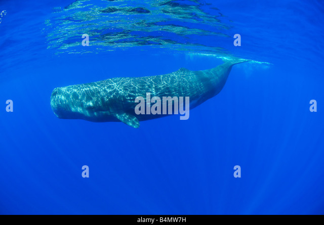 Whale Stock Photos & Whale Stock Images - Alamy