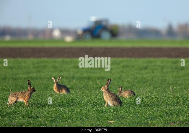 how to clear grassland for farmland