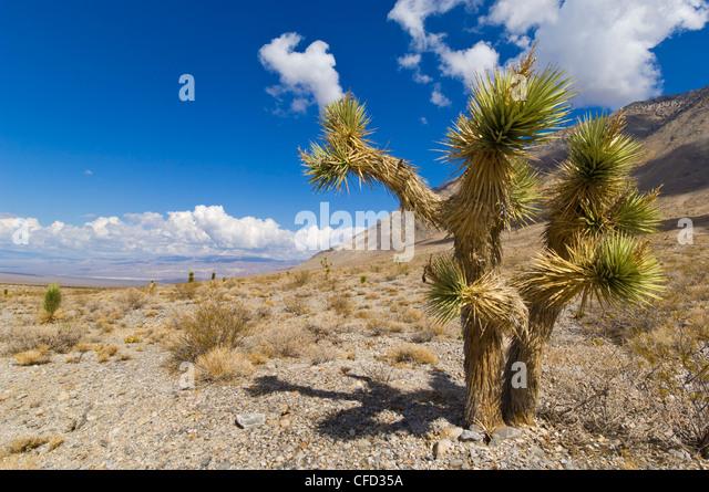 Yucca Tree Stock Photos Amp Yucca Tree Stock Images Alamy
