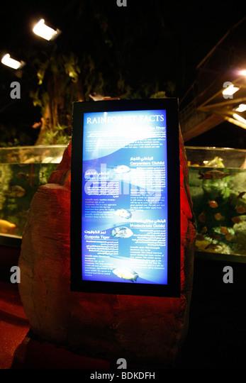 Dubai Aquarium in Dubai Mall, the shopping centre in Downtown, Dubai ...
