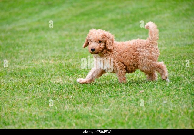 Dog Walks Hawick