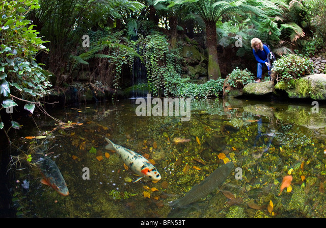 Garden pond uk fish stock photos garden pond uk fish for Koi pond pool