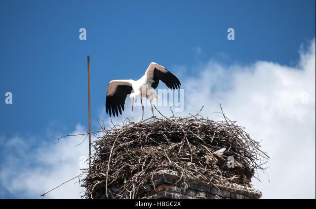 bird in blue nest house stock photos   bird in blue nest nexton homes summerville sc nexton house for sale