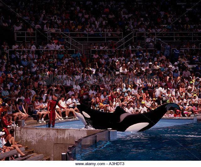 Killer whale sea world florida stock photos killer whale for Pool show orlando