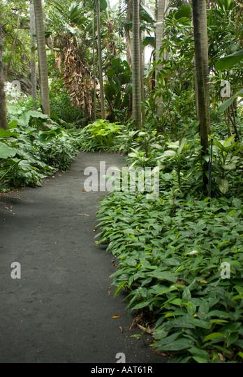 Foster botanical garden hawaii stock photos foster botanical garden hawaii stock images alamy for Foster botanical garden honolulu