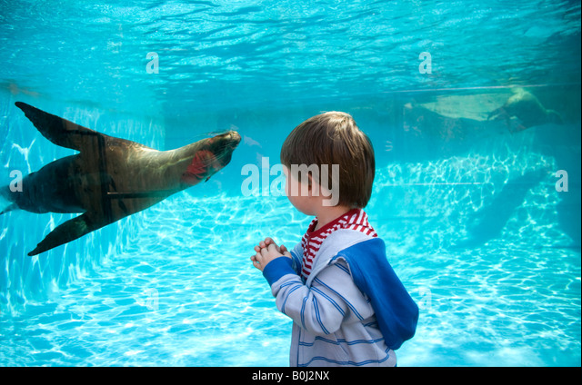 Sea Lion Swimming Pool Stock Photos Sea Lion Swimming Pool Stock Images Alamy