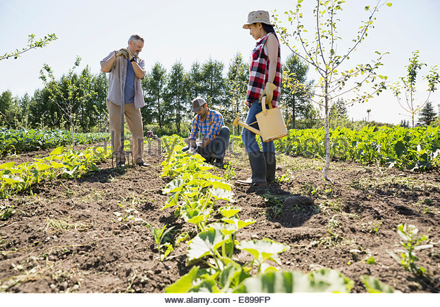 Women farm workers stock photos women farm workers stock images alamy for Tending to the garden