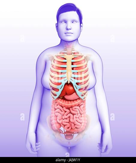 Female Body Organs Stock Photos & Female Body Organs Stock Images ...
