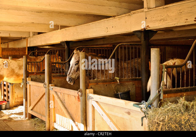 Horse Stables With Wooden Doors And Horses   Stock Image
