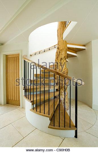 Modern Staircase Built Around Tree   Stock Image