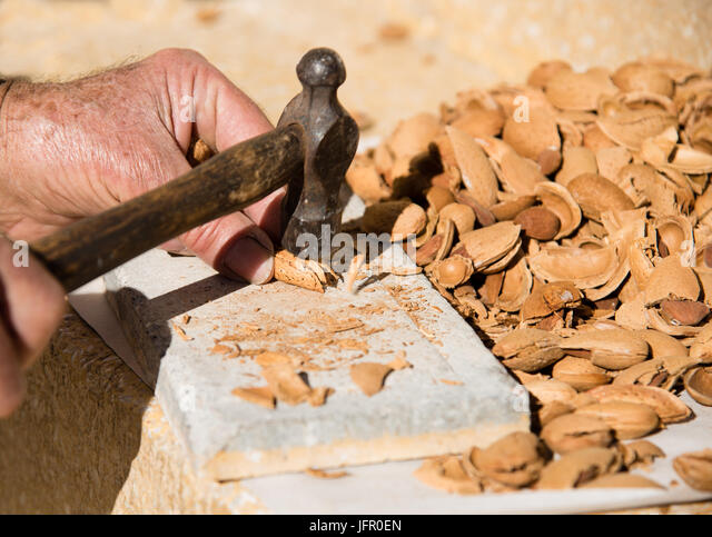 Senior adult cracking nut almond shells with a hammer to collect the healthy almonds. - Stock Image