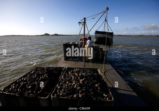 oyster dredging stock photos oyster dredging stock. Black Bedroom Furniture Sets. Home Design Ideas