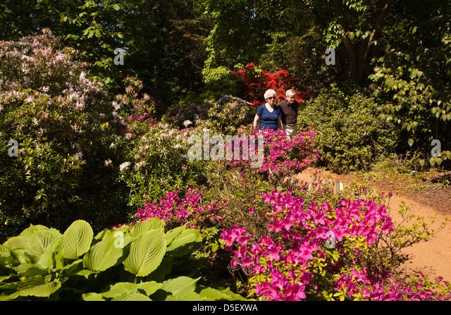Savill Gardens Stock Photos Savill Gardens Stock Images Alamy