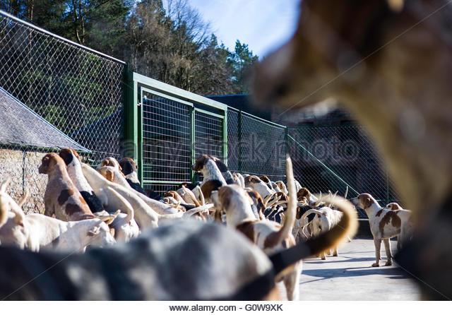 Dog Kennels Near Chester