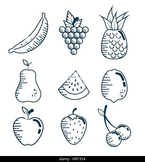 set fresh fruits handmade drawn stock image