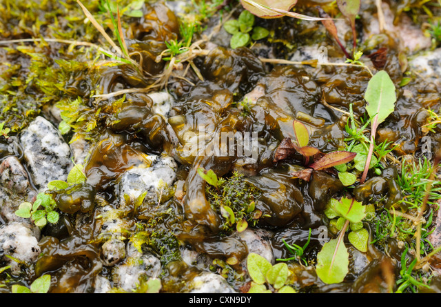 13 Algae Growth and Reaction Conditions