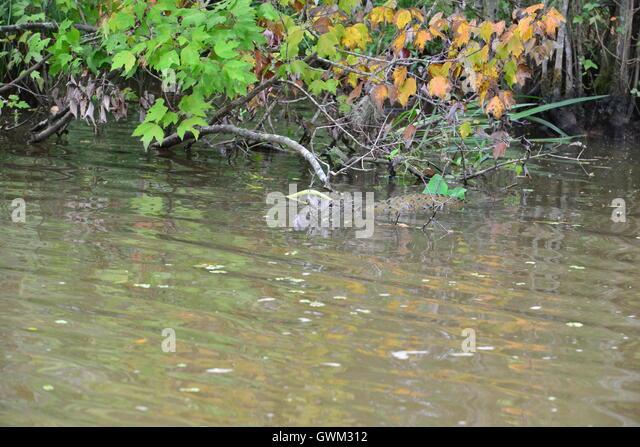 Murky Swamp Stock Photos Murky Swamp Stock Images Alamy