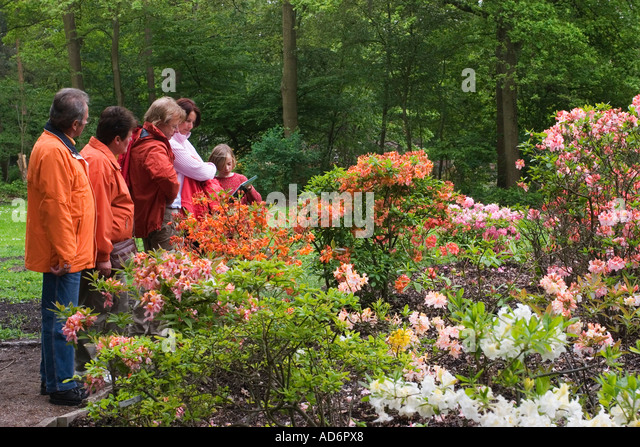 rhododendron park in bremen germany may 2006 stock photo. Black Bedroom Furniture Sets. Home Design Ideas