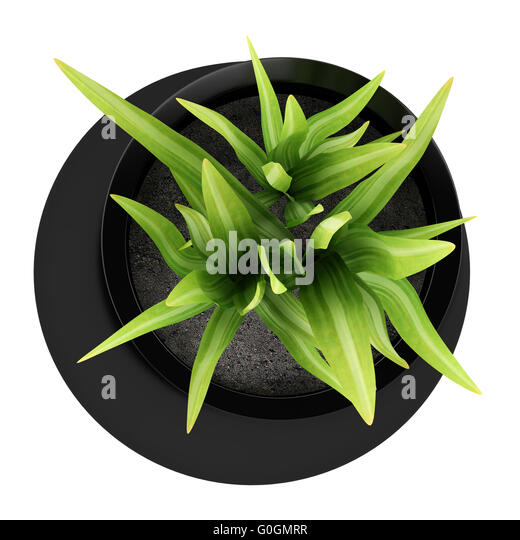 Potted Plant In Top Stock Photos & Potted Plant In Top Stock Images on umbrella top view, desk top view, tree top view, couch top view, table top view, plate top view, sculpture top view, rug top view, bedroom top view, spoon top view, apple top view, box top view, plant top view, rose top view, stool top view,