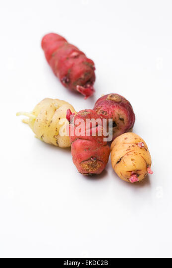 how to grow yams nz