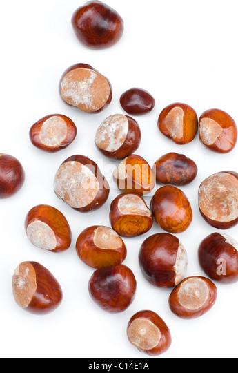 hindu singles in chestnut Looking for: female (single) 18 - 40  languages: english, hindu nationality: american  hair: auburn, bald, black, blond, chestnut, fair, grey.