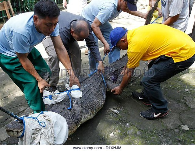 Philippines crocodile stock photos philippines crocodile for Bureau tagalog