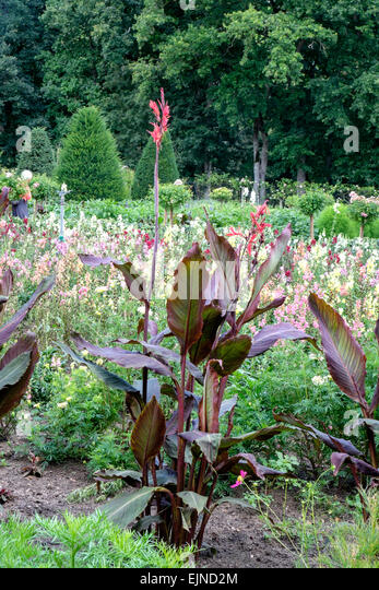 cannas garden stock photos cannas garden stock images alamy. Black Bedroom Furniture Sets. Home Design Ideas