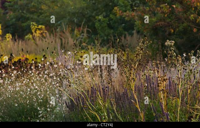 Ornamental grasses border grasses stock photos for Ornamental sea grass