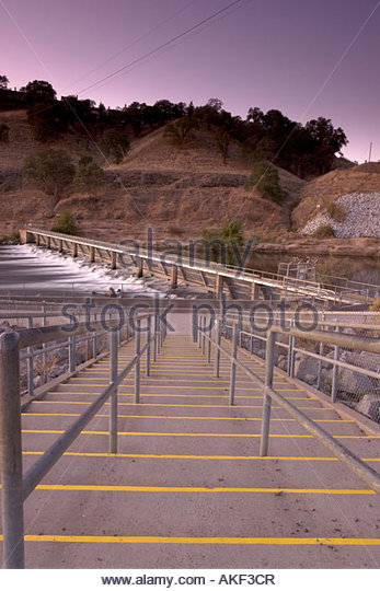 Trout ladder stock photos trout ladder stock images alamy for Nimbus dam fishing