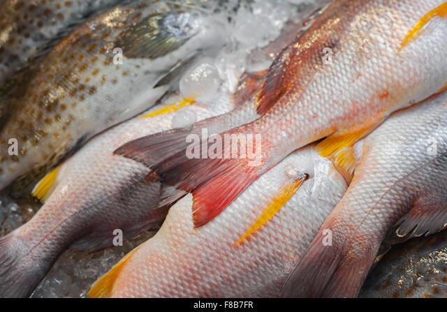 Thailand animal market stock photos thailand animal for White fish market