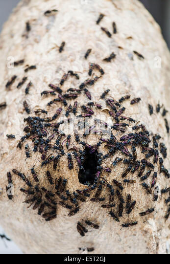 how to find flying ant nest