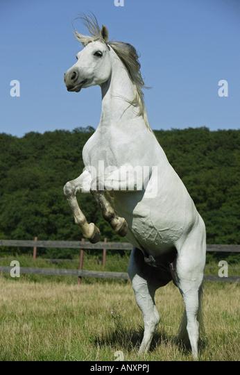 Uffington White Horse  Wikipedia