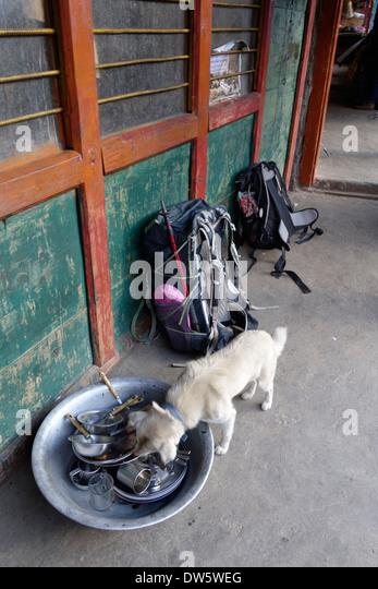 Dog S D Food Licking Floor