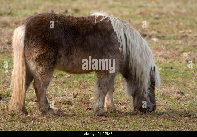 long manes stock photos - photo #29
