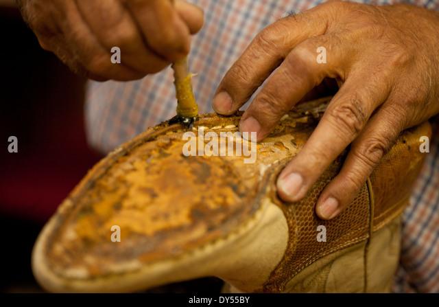 indian cobbler stock photos indian cobbler stock images