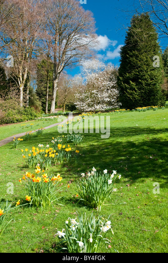 Threave daffodils stock photos threave daffodils stock for Garden trees scotland