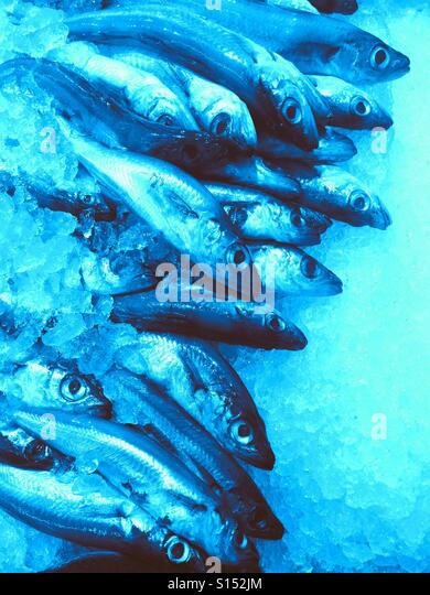 Sale ocean fish stock photos sale ocean fish stock for Stock fish for sale