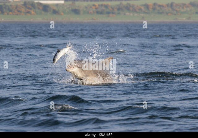 Dolphin Food Stock Photos Amp Dolphin Food Stock Images Alamy