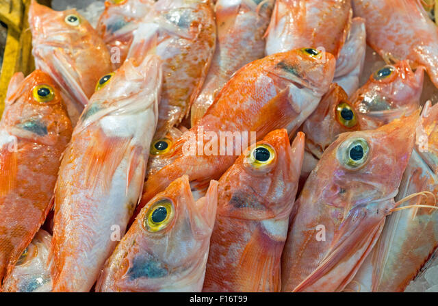 Grey mullet fishing stock photos grey mullet fishing for Stock fish for sale